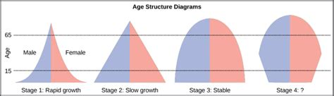 Age Structure Diagram by Age Structure Population Growth And Economic Development