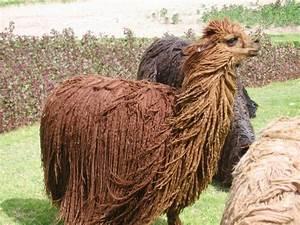 Alpaca Wool Blankets: Amazingly Warm And Inexpensive