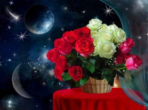 good evening rose wallpaper gallery