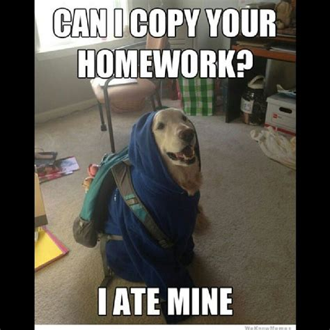 Meme Pun - image gallery math funny dog