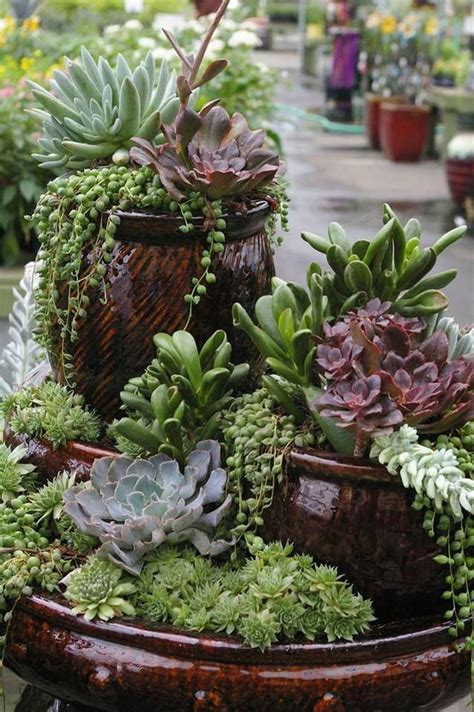 Do-it-yourself succulent displays | Home And Garden | victoriaadvocate.com