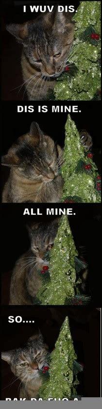 Cat Christmas Tree Meme - scumbag cats meme guy