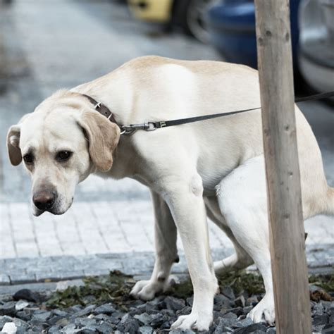 diarrhea in dogs dog diarrhea here s what you need to know
