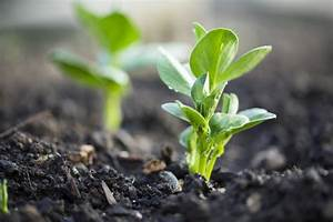 Interesting Facts About Bean Plants You Probably Haven U0026 39 T