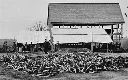Point Slaughterhouse Virginia History Union Photographic Cattle