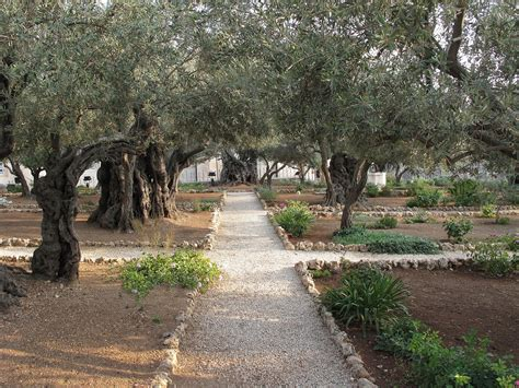 Raising Your Children In Gethsemane Gardens Catholicmom