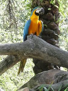 Pam's blog: Busch Gardens, Sesame & Madagascar characters ...