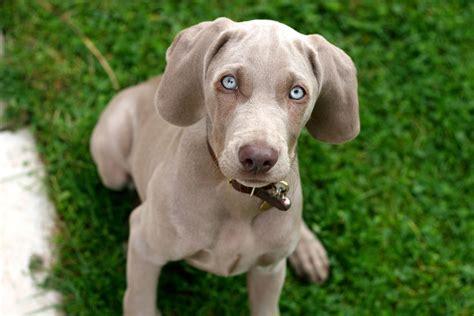 fascinating dog breed name origins reader 39 s digest
