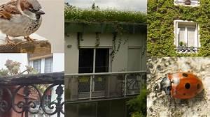 Plantes D Hiver Extérieur Balcon : plantes d hiver pour balcon finest pots dextrieur avant ~ Nature-et-papiers.com Idées de Décoration