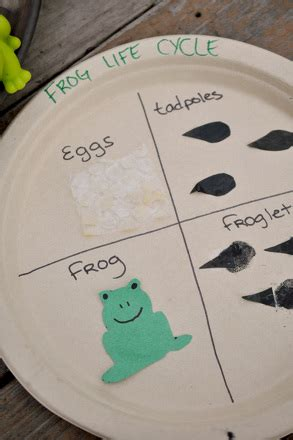 craft  frog life cycle activity educationcom