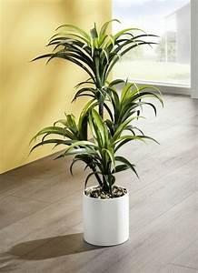 Yucca Palme Winterhart : yucca palme im topf kunst textilpflanzen bader ~ A.2002-acura-tl-radio.info Haus und Dekorationen