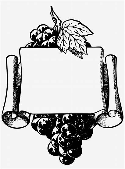 Wine Grapes Grape Frame Frames Vine Clip
