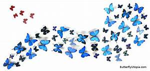 Butterfly Art Pictures - Cliparts co