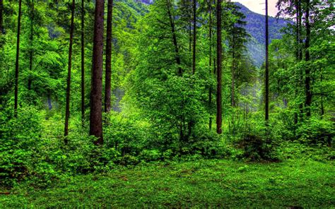 Green Forest Photo Hd by Green Forest Wallpaper Hd Wallpapersafari