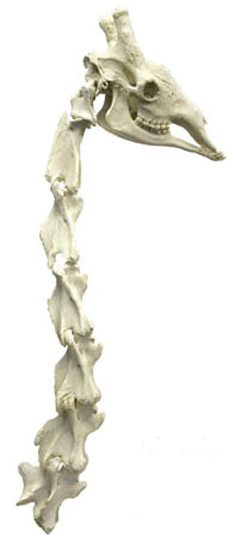 giraffe idea
