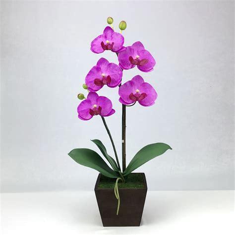 ดอกกล้วยไม้ phalaenopsis สี soft lavender จัดในกระถางไม้
