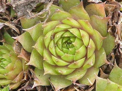 piante e fiori d appartamento coltivare piante grasse in appartamento le piante grasse