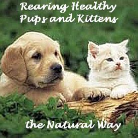 Holistic Cat Care And Natural Remedies