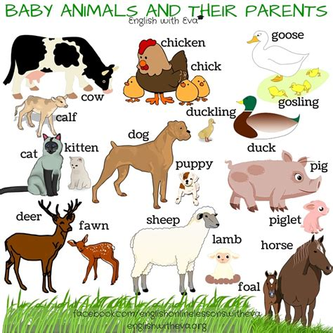 90 Names of Baby Animals and Their Parents