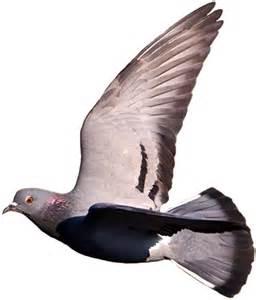 Mumtaztic Pigeon Loft