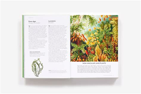 botanical bible hardcover abrams