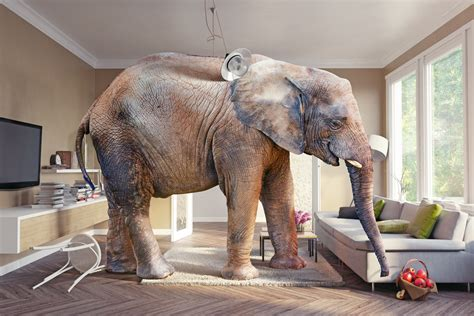 Elephant In The Living Room Definition by The Elephant In The Room Mind Munchies Medium