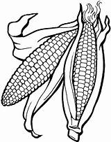 Corn Coloring Pages Ear Cob Food Drawing Getcolorings Printable Indian Template Vegetables Fall Unique Body Print Stalk Getdrawings Wickedbabesblog sketch template
