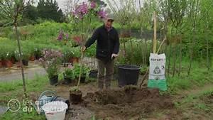 Comment Planter Un Camélia : comment un planter un arbre en pleine terre partir d 39 un conteneur le lilas commun youtube ~ Melissatoandfro.com Idées de Décoration