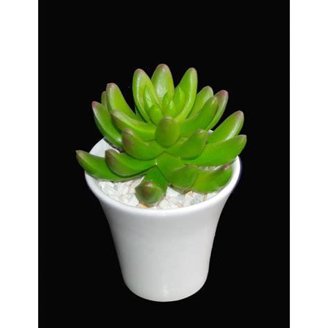 entretien cactus en pot 28 images cactus euphorbe 50 60 cm plante naturelle tr 232 s facile