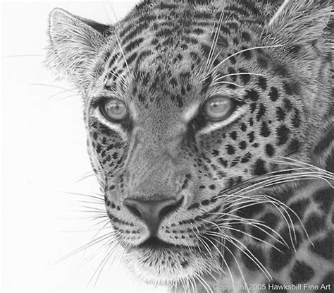 realistic animal drawings hyper realistic animal drawing