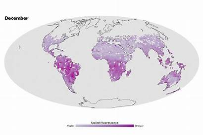 Photosynthesis Mapping Space Nasa Geographical Magazine
