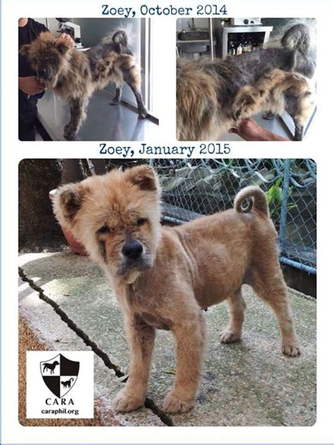 welfare philippines blog archive zoey  growing