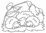 Igel Bestcoloringpagesforkids Erizos Paginas sketch template