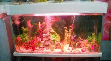 combien de poisson dans un aquarium combien de poissons rouges dans un aquarium de 150l