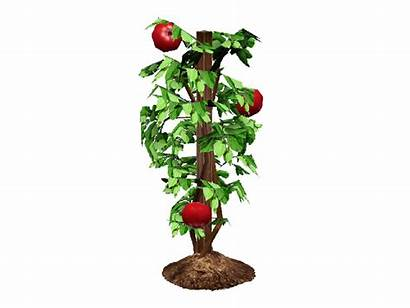 Tomato Plant Clipart Transparent Sims Gardening Guide