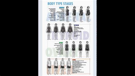 The Body Type Stages I Adrenal, Thyroid, Ovary & Thyroid