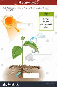 Photosynthesis Diagram Worksheets