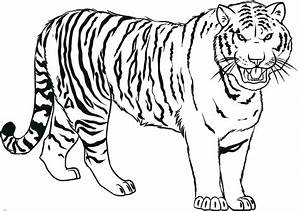How To Draw Tiger   Step By Step Guide