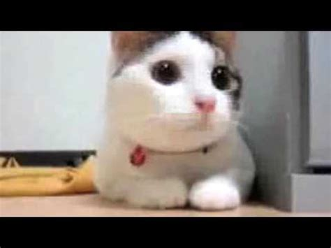 Funny Funny Cat Videos Videos & Download Youtube Mp4 Vizhole