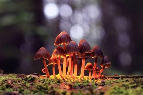 california vote  decriminalize magic mushrooms