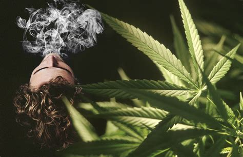 medical   cannabis weed  thc