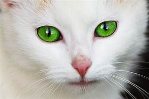 File:Cat with green eyes.jpg - Wikimedia Commons