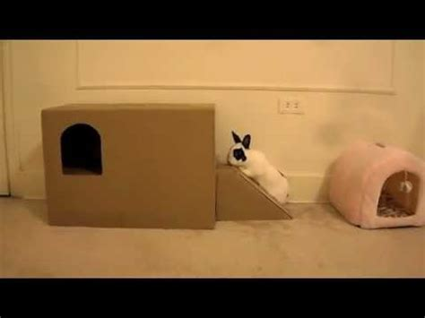home  playhouse   rabbit youtube