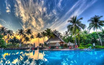 Palm 4k Pool Desktop Trees Sunset Wallpapers