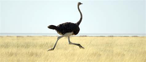 ostriches  teach   risk knowledgeatwharton