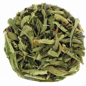 Verveine Plante Tisane : tisane verveine odorante vert tiges ~ Mglfilm.com Idées de Décoration