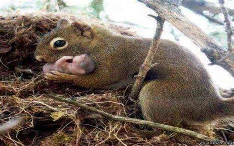 jeux cuisine de bébé écureuil