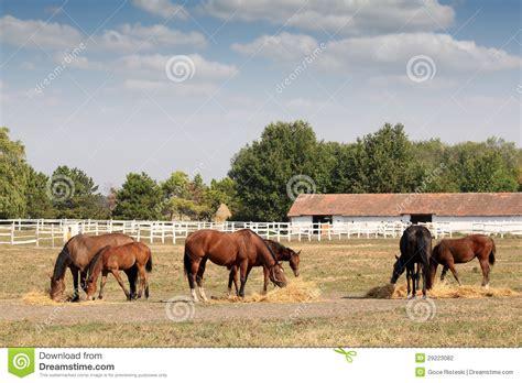 corral horses farm scene