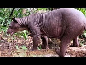 Hairless Grizzly Bear | www.pixshark.com - Images ...