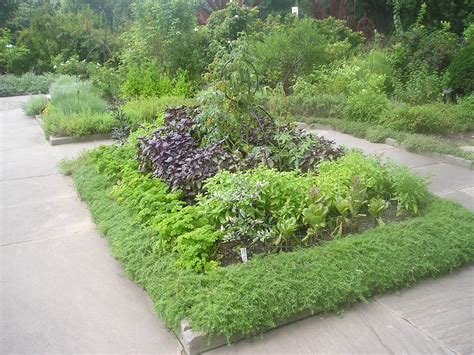 1000+ Images About Growing Herbs In The Garden On